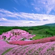 周辺観光(東藻琴芝桜公園)