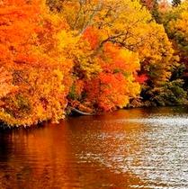 紅葉の和琴半島