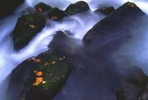 秋の渋黒川