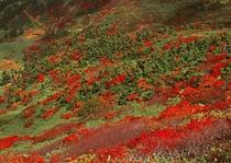 秋の畚岳斜面