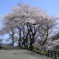 春には当館の周辺で桜がきれいに咲きます♪