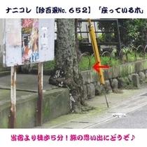 ナニコレ【珍百景No.652】「座っている木」