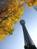 sub:紅葉とマリンタワー
