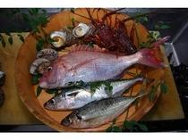 佐田岬で獲れる魚たち