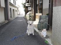ロンとルイの散歩2