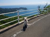 ロンと伽藍山へ散歩