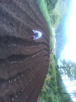 我が家の畑