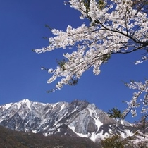 <周辺・景観>大山と桜