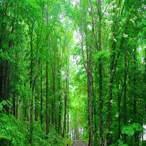 絆の森散策路
