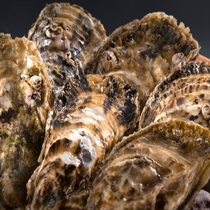 冬が旬の浦村牡蠣