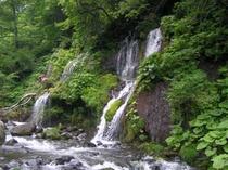 吐竜の滝・夏