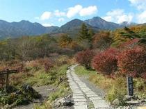 秋の美が森