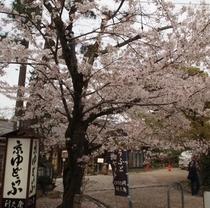 円山公園 近隣には京都らしい食事処がたくさん
