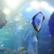 水族館 えい