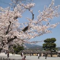 嵐山 渡月橋と桜<ホテルから嵐電で約20分>