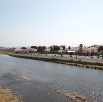 渡月橋から眺める嵐山公園☆お花見スポット