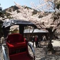 嵐山 人力車と桜