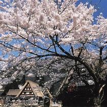 菅沼の四季 春
