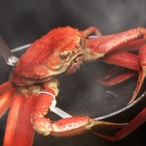 当店厨房で茹で上げた本ずわい蟹