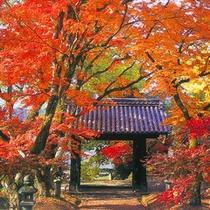 秋月 紅葉