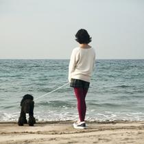 波穏やかな鱚が浦海岸