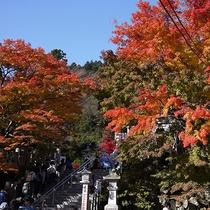 *[秋の大山阿夫利神社]紅葉の見頃は例年11月中旬~下旬頃