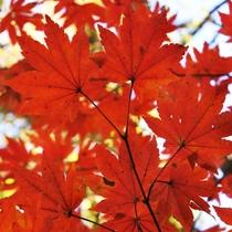 ■温泉旅行で紅葉を楽しもう