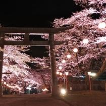 ■夜桜ライトアップ