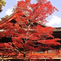 ■東照宮の紅葉