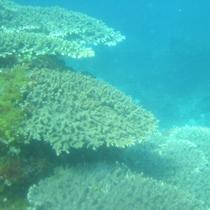 手つかずの自然が残る五島列島の海