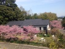 宿遠景(桜)