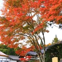 秋の外観5