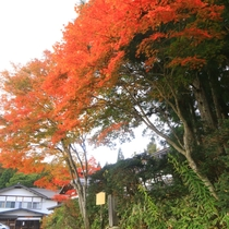 秋の外観6