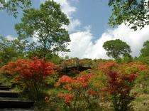 夏:美し森