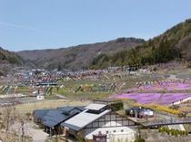 春:鯉のぼり祭り