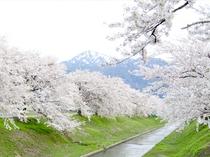 新江用水路桜並木