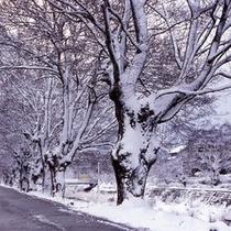 雪が積もった彦根市内