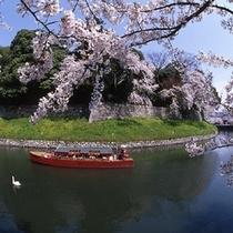 桜シーズンの彦根城屋形船遊覧