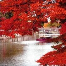 紅葉と彦根城の屋形船