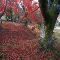 紅葉シーズンの彦根城敷地内