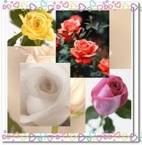 美しいバラの花が目の前に広がる。