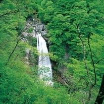 【観光スポット】秋保大滝(緑水亭よりお車で約25分) 写真提供:宮城県観光課