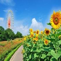 【観光】国営ひたち海浜公園<夏>(ホテルより車で約50分)
