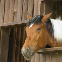グリーン牧場の馬
