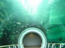 スケールの大きな琵琶湖博物館。ビワコオオナマズを始め、淡水魚を展示しています。