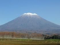 羊蹄山(晩秋アップ)