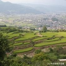 姨捨の棚田は、千曲川を見下ろす斜面に田が広がる美しい光景です。