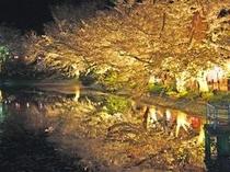 臥竜公園の夜桜
