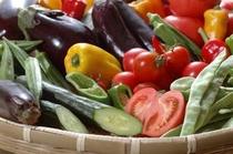 高知の新鮮野菜を使っております。