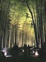 嵐山花灯路 ・竹林の小路